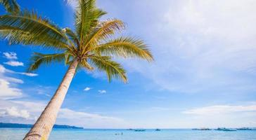 Coconut Palm tree on the sandy beach background blue sky photo