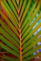 Palm tree leaf, digital watercolor paint effect photo