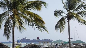 palmtree photo