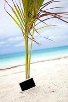 Empty photo card on beach