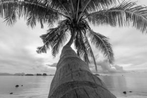 Coconut trees by the sea, Koh Yao Noi photo