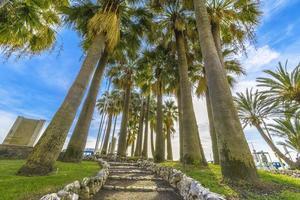 Walk through the Palms photo