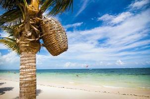 Cesta tejida en palmera en la playa del Caribe foto