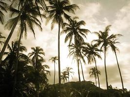 The Palm trees_IV