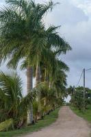 Palmtrees photo