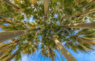 Under the Palms photo