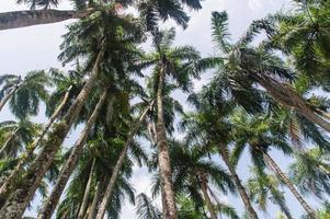 Palmentuin photo