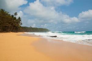 playa tropical con palmeras y mar agitado.