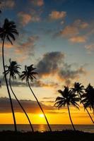 Palms and sun photo