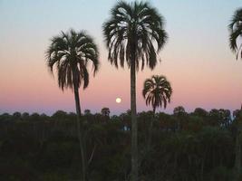 amanecer con palmeras foto