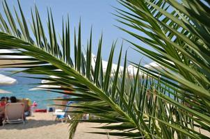 Palm branches and beach