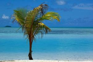 Tropical scene photo