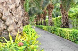 Pasarela en el jardín con palmeras a lo largo de dos lados. foto