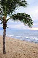 Palmera en la playa en Puerto Vallarta, México foto