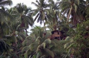 Little Hut on Tropical Hill with Palm Trees