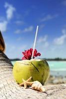 cocos en la playa foto