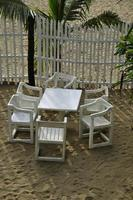 White chairs against a palm tree at a cafe at the beach