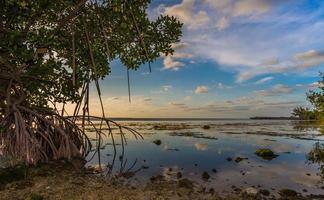 Mangroves drip into water off Key Largo, Florida near sunset.