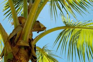 palmtree closeup photo