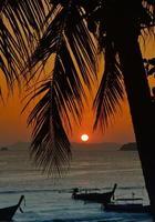 puesta de sol con hojas de palma.