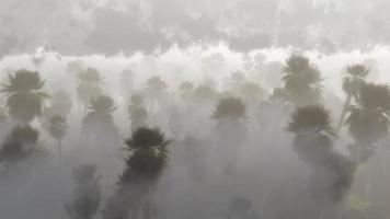 Tall grove of palm trees rising out of the mist photo