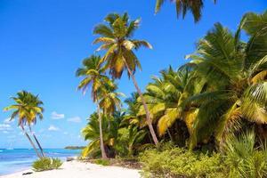 playa de arena del caribe foto