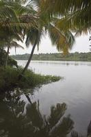 Palms along canals and lakes in Backwaters