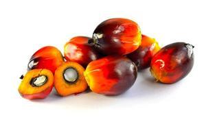 Oil palm fruits photo