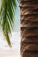 primer plano de palmera tropical foto