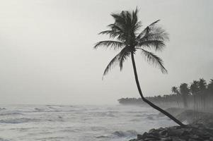 Lonely palm tree facing the storm photo
