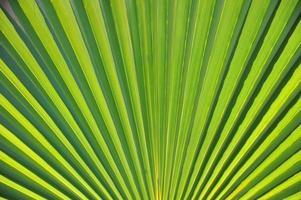 Palmenblatt photo