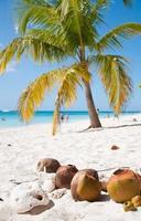 mar caribe y playa