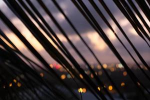 Palm branch silhouette at sunset - diagonal lines photo