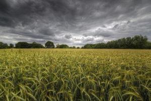 campo y tormenta