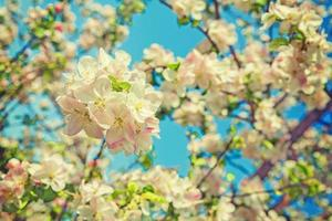 floral view blossom of apple tree on blurred sky background