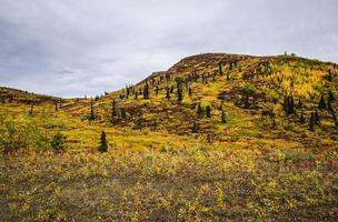 Golden Alaskan Hillside in Autumn