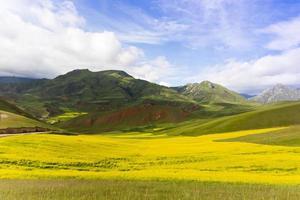 oilseed field