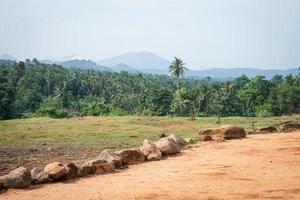 Nature Of Sri Lanka. photo