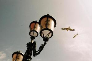 Seagulls by Light Post photo