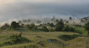 Fog on the valley.. photo