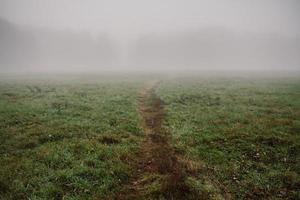 Misty field.