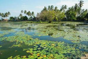 Beautiful lotus lagoon in Candidasa, Bali