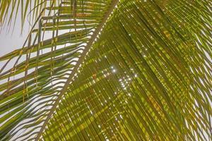 Palm leaves background, bright sun light through exotic foliage photo