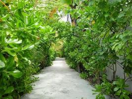 Nature Alley photo