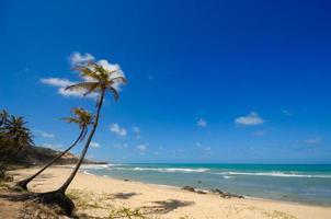 Beautiful beach with palm trees at Praia do Amor Brazil photo