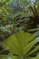 Rainforest clearing with a pool photo
