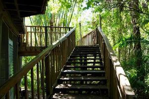 Escalera de madera artesanal en seting tropical