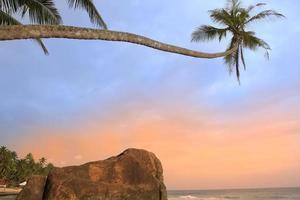 Leaning palm tree with big rocks, Unawatuna beach, Sri Lanka