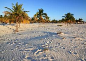 White sand and palm trees. Playa Sirena. Cayo Largo. Cuba. photo