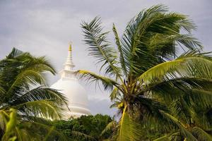 Palms tree, Japanese peace pagoda on background, Unawatuna Sri Lanka
